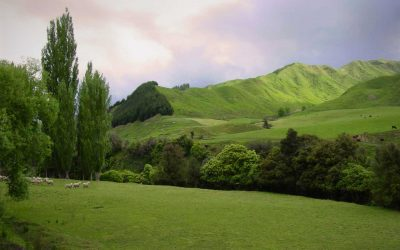 Countryside-rolling-hills-North-Island