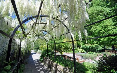 English-gardens-South-Island