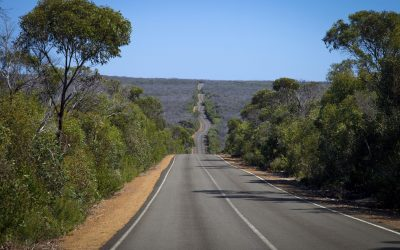Forest road_SA_20747778_Large