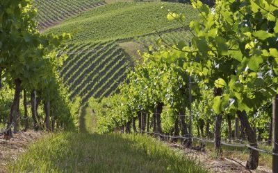 Vineyards_WA_22493225_Large